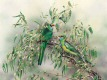 Ian Roberts - Malee Ringneck Parrots In The Valley